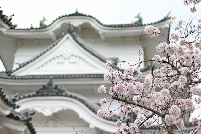 8. 忍者の国伊賀で桜の花見を楽しむ!「上野公園」