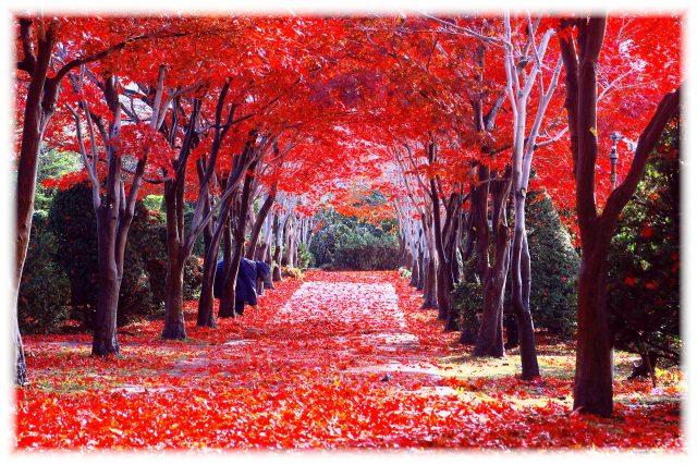 4. 日本庭園が茜色に色づく姿は圧巻。札幌の人気紅葉スポット「平岡樹芸センター」