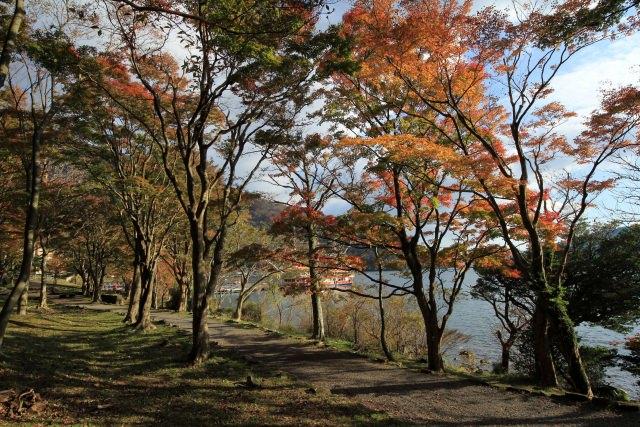 4. リゾートエリアで紅葉散策「芦ノ湖」