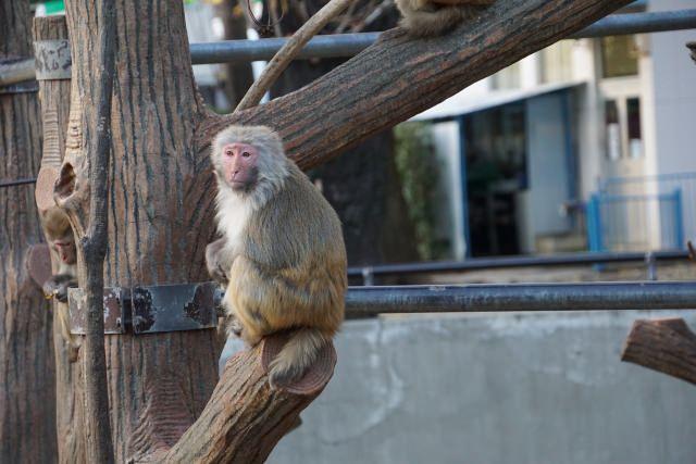 5. 動物の専門家にいろいろ聞ける!動物に詳しくなりたいなら!「井の頭自然文化園」
