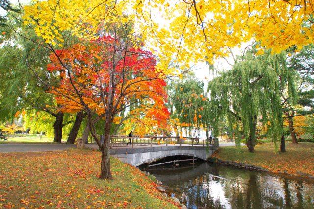 9. 札幌の豊かな自然が紅葉にそまるスポット!「中島公園」