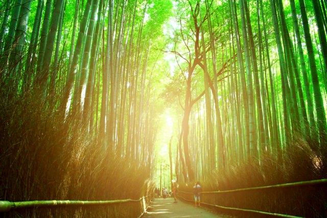 4. 秋にはしっとり優しい雰囲気を味わえる「竹林の道」