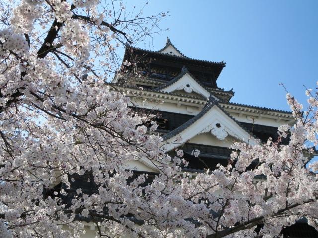 1. 熊本で桜の花見の名所といえばここ!「熊本城」