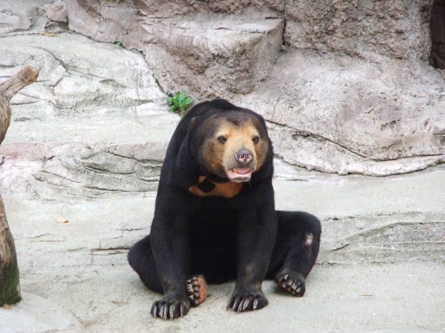 1. 都会の真ん中に位置するオアシス的な動物園「天王寺動物園」