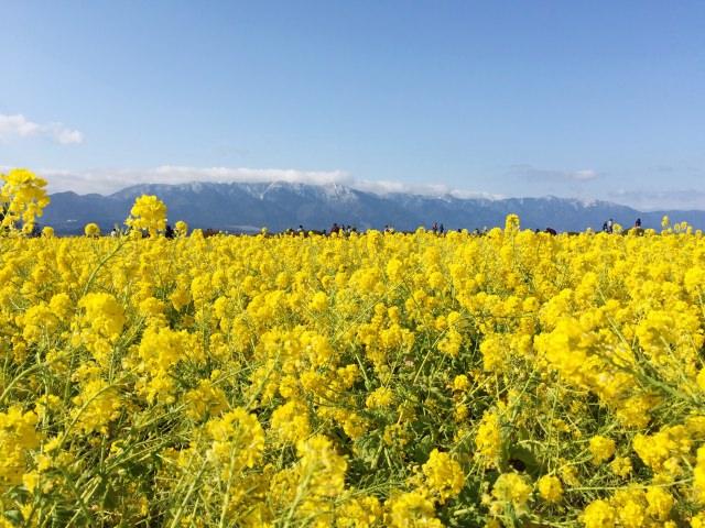 10. 琵琶湖に沿って伸びた大津の癒しのスポット「なぎさ公園」