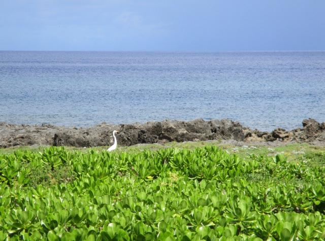 9. 久米島の神秘的な観光スポット!「ミーフガー」
