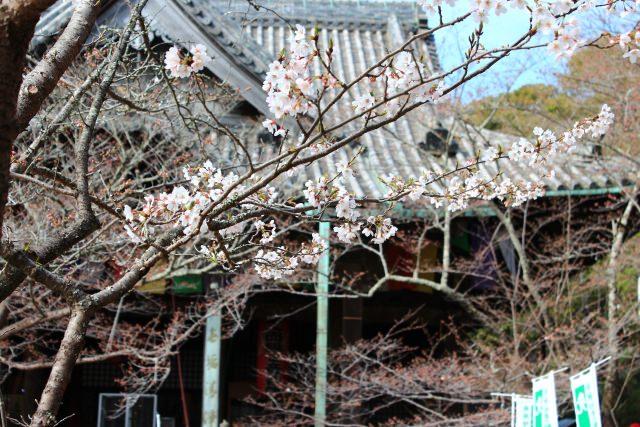 10. 歷史建築物與櫻花的景色真的是絕景!「紀三井寺」