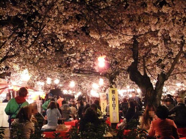 4. 京都で有名なシダレザクラを楽しむ。「円山公園」
