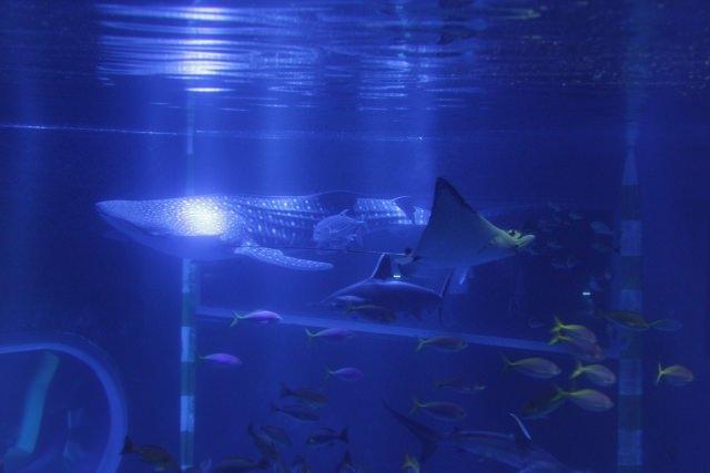 2. 石川県で海の生物を楽しむ。世代問わず人気な観光スポット「のとじま水族館」