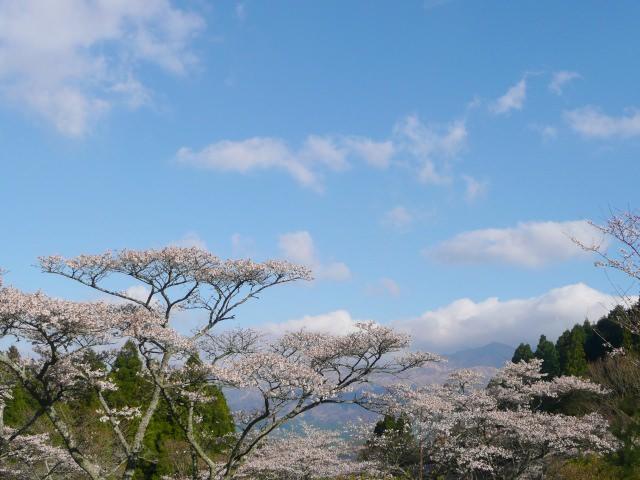 4. 一面に広がる桜風景は必見!「高森峠千本桜」