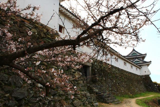 2. 桜をまとった白亜の天守閣!観光名所としても人気な「和歌山城」