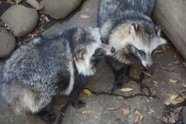 3. さまざまな動物たちに出会える動物園「井の頭自然文化園」