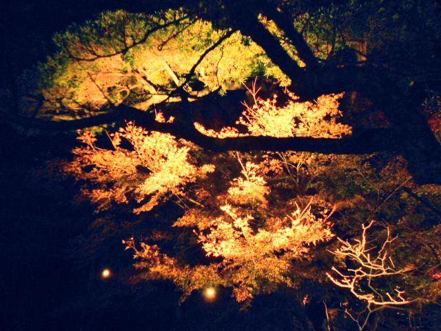 7. 紅葉ライトアップが美しい!「長谷寺」