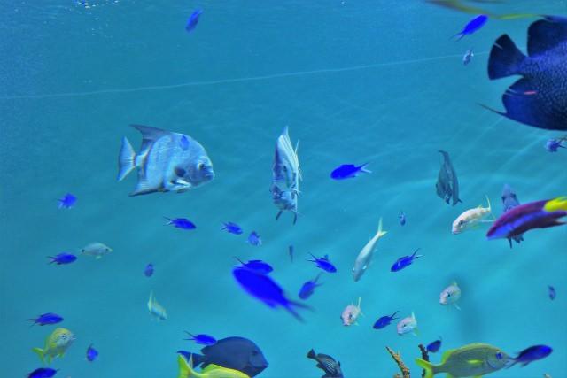 2. 広大な敷地の一角にある水族館「東京都葛西臨海水族園」