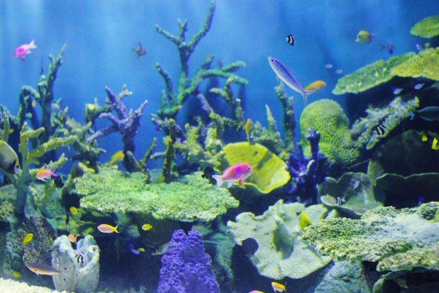 3. 自然に囲まれた水族館!「しながわ水族館」