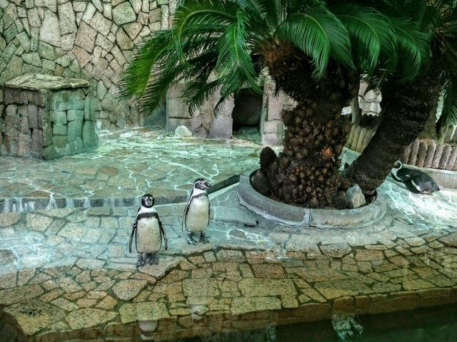 5. 小型動物と触れ合える、入園無料の「江戸川自然動物園」