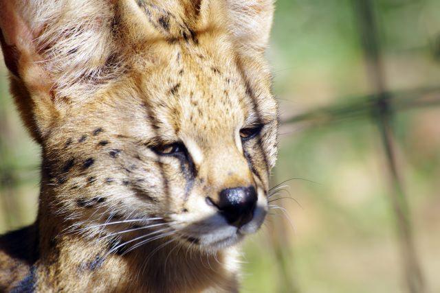 2. 緑が多く、動物たちが自由に生活している動物園「多摩動物公園」