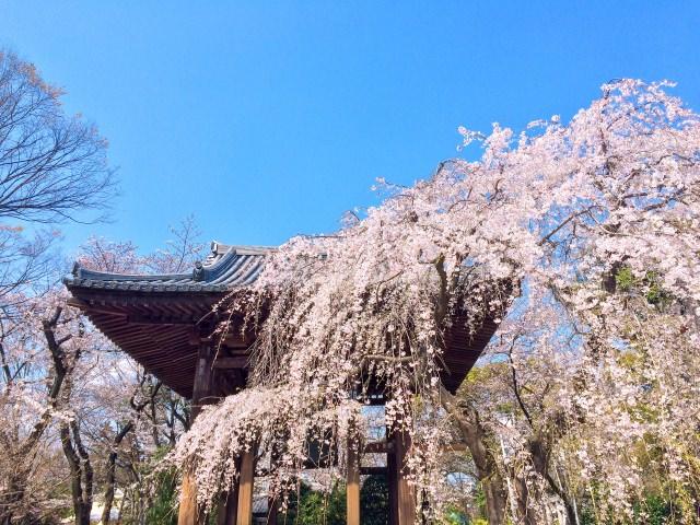 増上寺はパワースポットとしても有名!