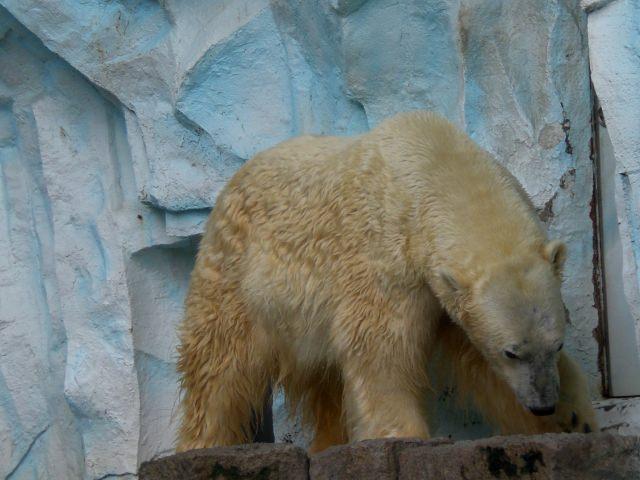 上野動物園には海の生物も!「ホッキョクグマとアザラシの海」