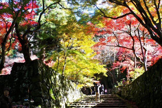 4. 琵琶湖の東側に点在する紅葉の名勝!「湖東三山」