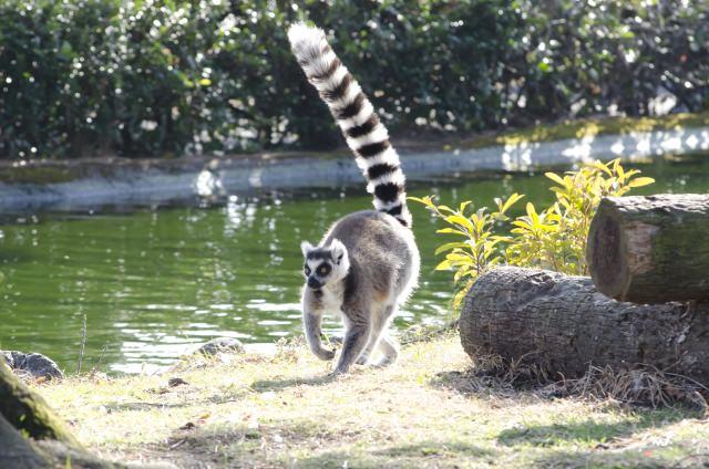水辺で楽しむ上野動物園!「アイアイのすむ森」