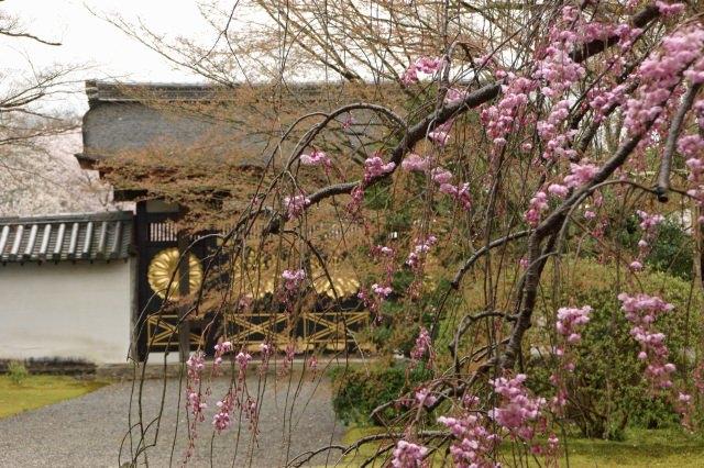 美しい日本庭園を楽しむ「三宝院」