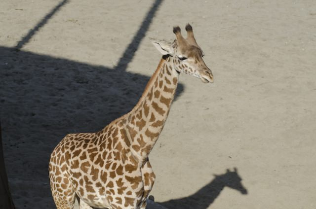 地球の裏側の動物達を!「アフリカの動物」